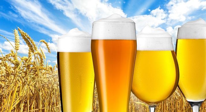 Calcular el proceso cervecero